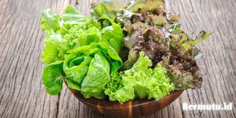 jenis tanaman yang dapat ditanam secara hidroponik - selada