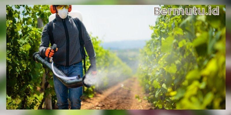 Keunggulan Bercocok Tanam Hidroponik - bisa menekan penggunaan pestisida