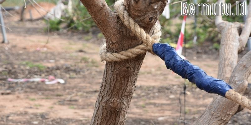 Inspirasi Dekorasi Desain Taman Bermain Anak - manfaatkan pohon besar