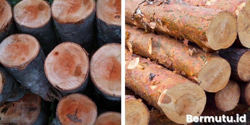 jenis-jenis kayu jati belanda