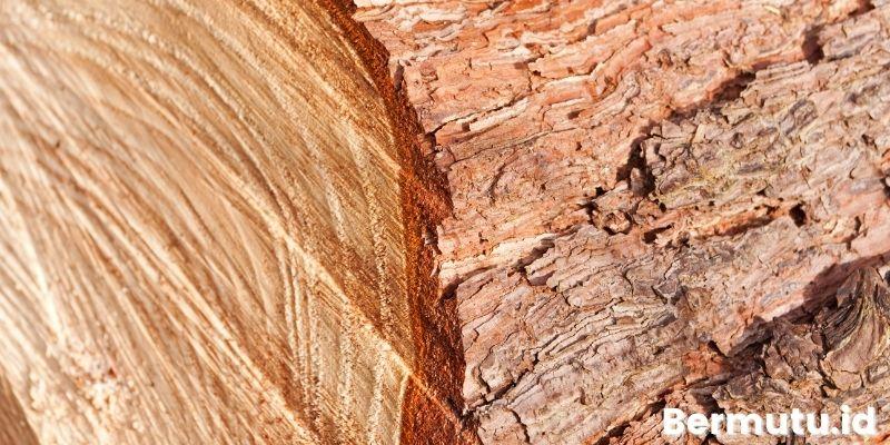 karakteristik kayu jati belanda
