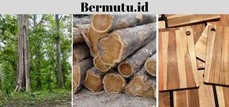 jenis kayu jati