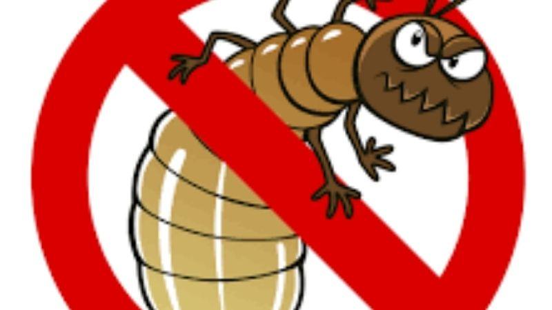 papan jati anti rayap