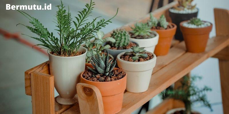 jenis tanaman hias yang harganya murah