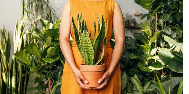 7 jenis tanaman hias beracun