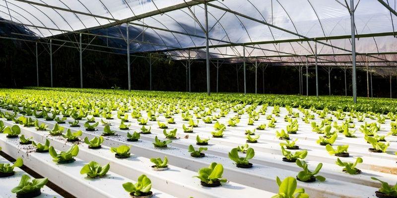 jenis tanaman yang dapat ditanam secara hidroponik