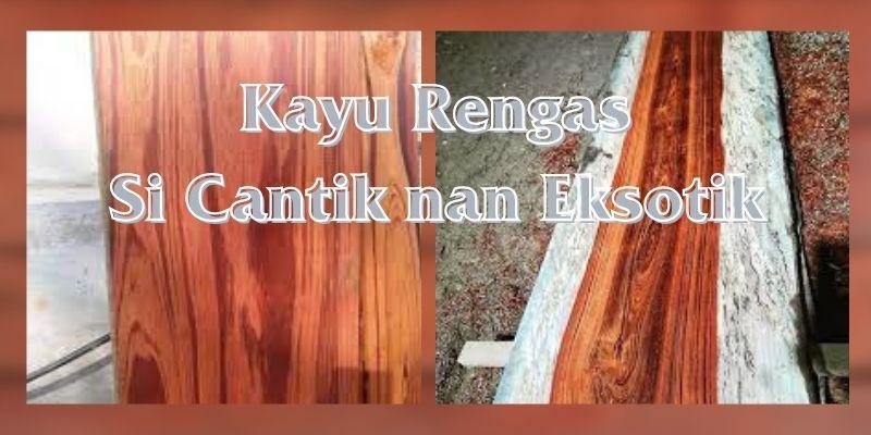 mengenal kayu rengas